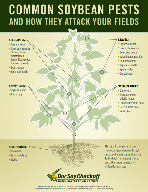 common soybean pests