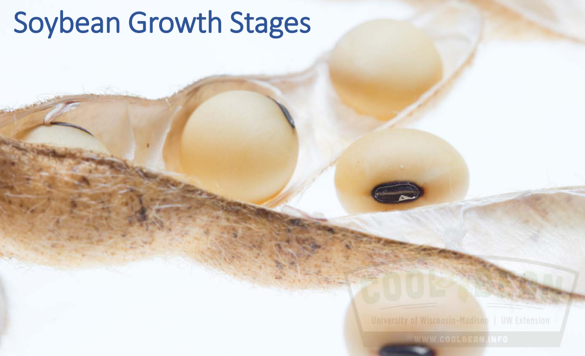 growth-stages