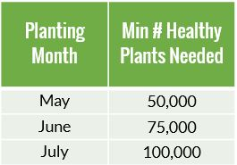 min plants