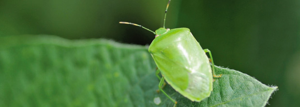 nc-insect-guide-banner-620