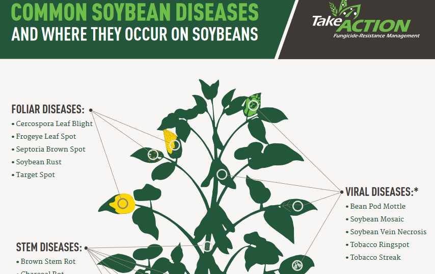 How to Spot Common Soybean Diseases - North Carolina