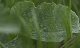 The Benefits of Cover Crops