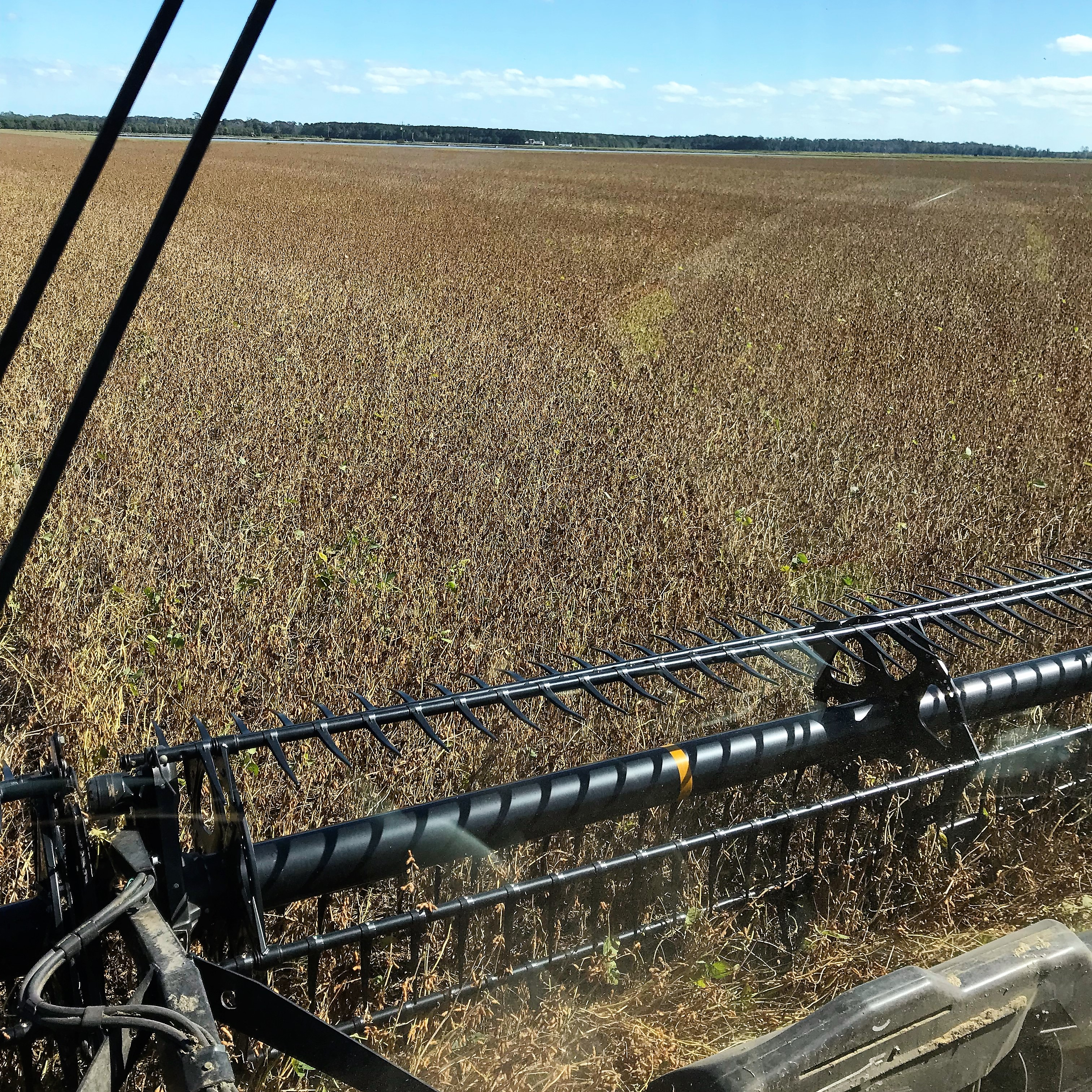 Delayed Harvest and End of Insurance Period