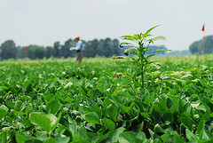 Begin Weed Control After Harvest for Cleaner Fields Next Season