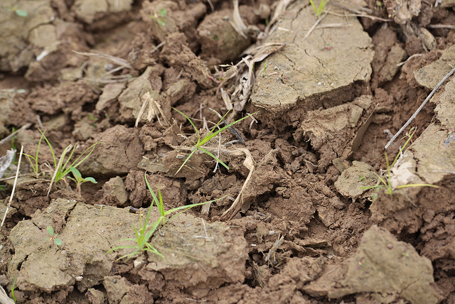 How to Use Soil Test Results