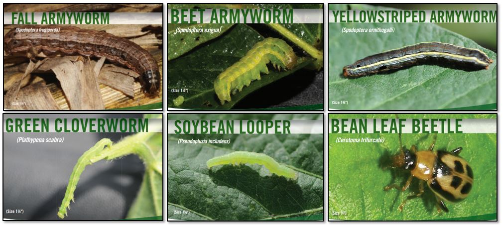 common foliage feeders