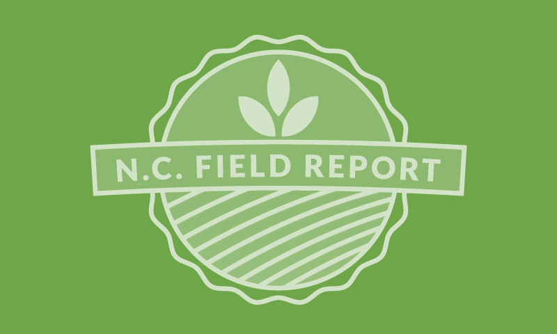Soybean Cyst Nematodes in NC – Part 2