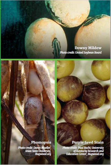 seed-disease